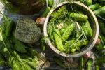 Огурцы малосольные рецепт без воды – Хрустящие малосольные огурцы в кастрюле — быстрый рецепт за 5 минут — с холодной водой и горячим способом. Как замолосолить огурцы быстро в кастрюле »
