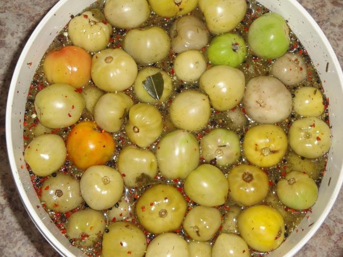 Соление зеленой помидоры – Как правильно солить зеленые помидоры? Сколько солить зеленые помидоры в домашних условиях?